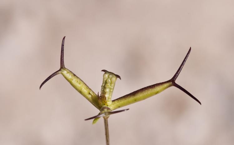 Image of pitchfork