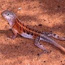 Image of Three-eyed Lizard