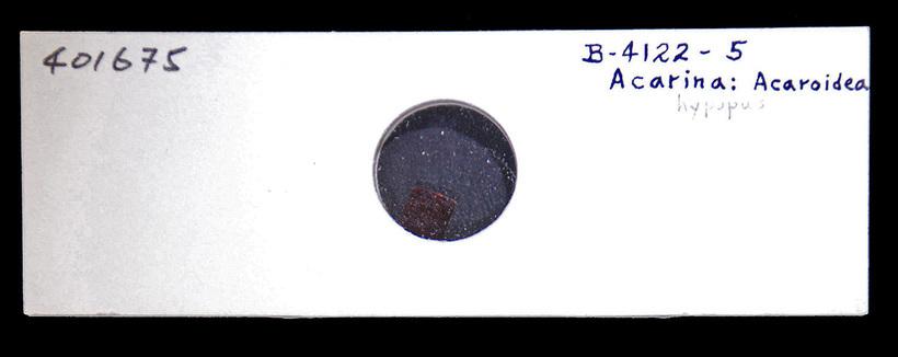 Image of Astigmata