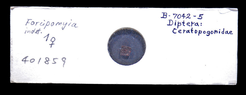 Image of Forcipomyia