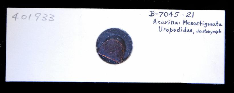 Image of tortoise mites