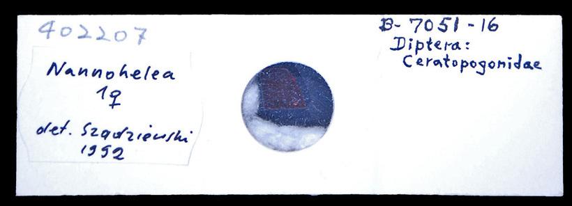 Image of Nannohelea