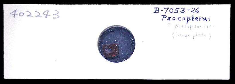 Image of middle barklice