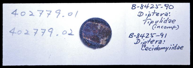 7.calphotos 0000 2222 9825 1914