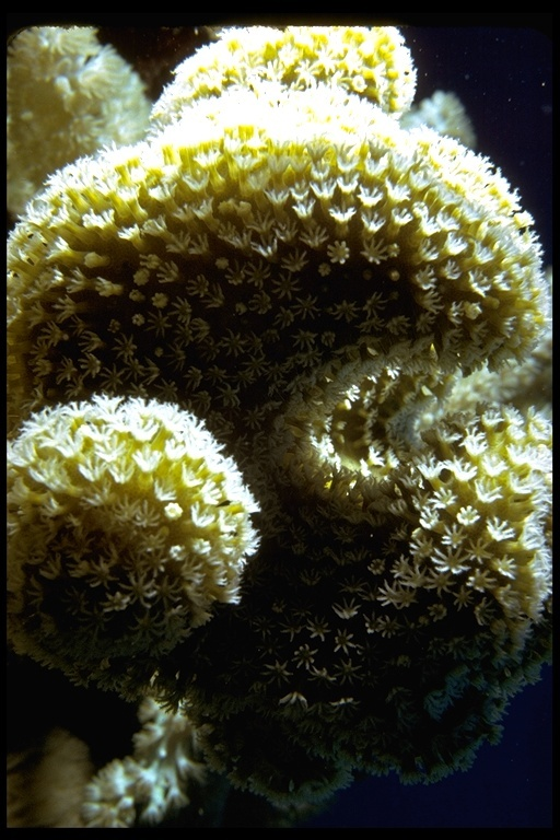 Image of anemones and corals