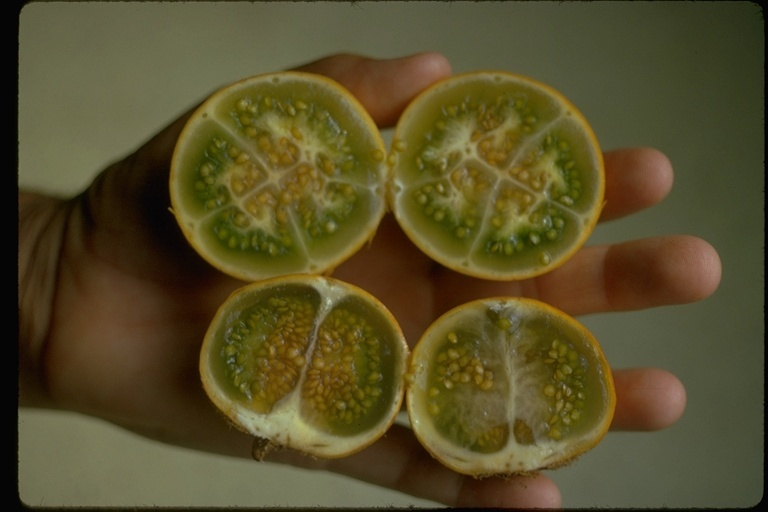 Image of naranjilla