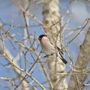 Image of finches