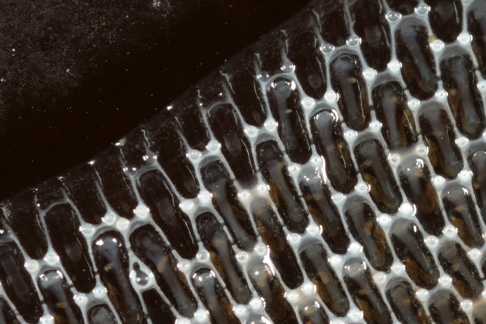 Image of Marine bryozoan