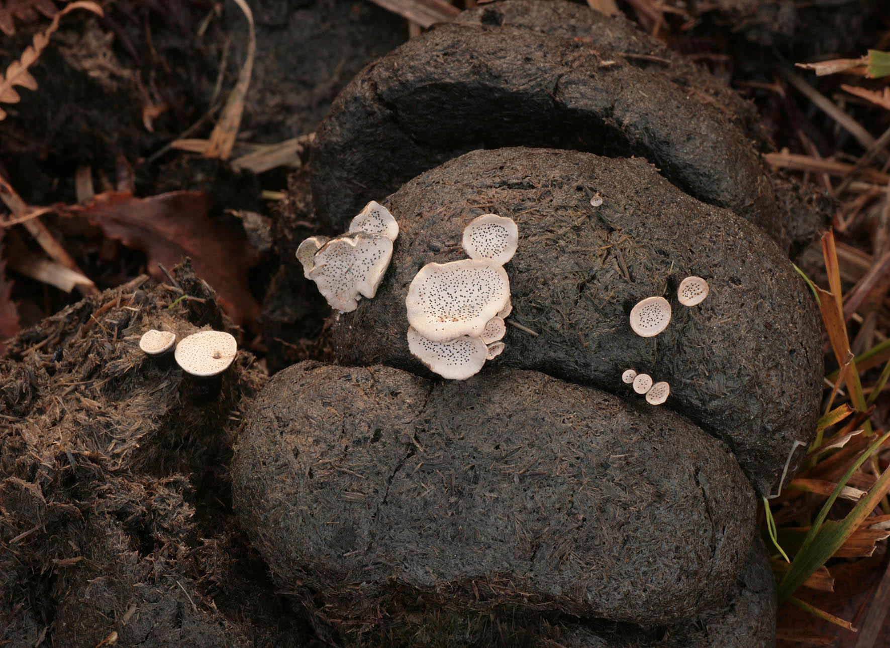 Image of Nail fungus