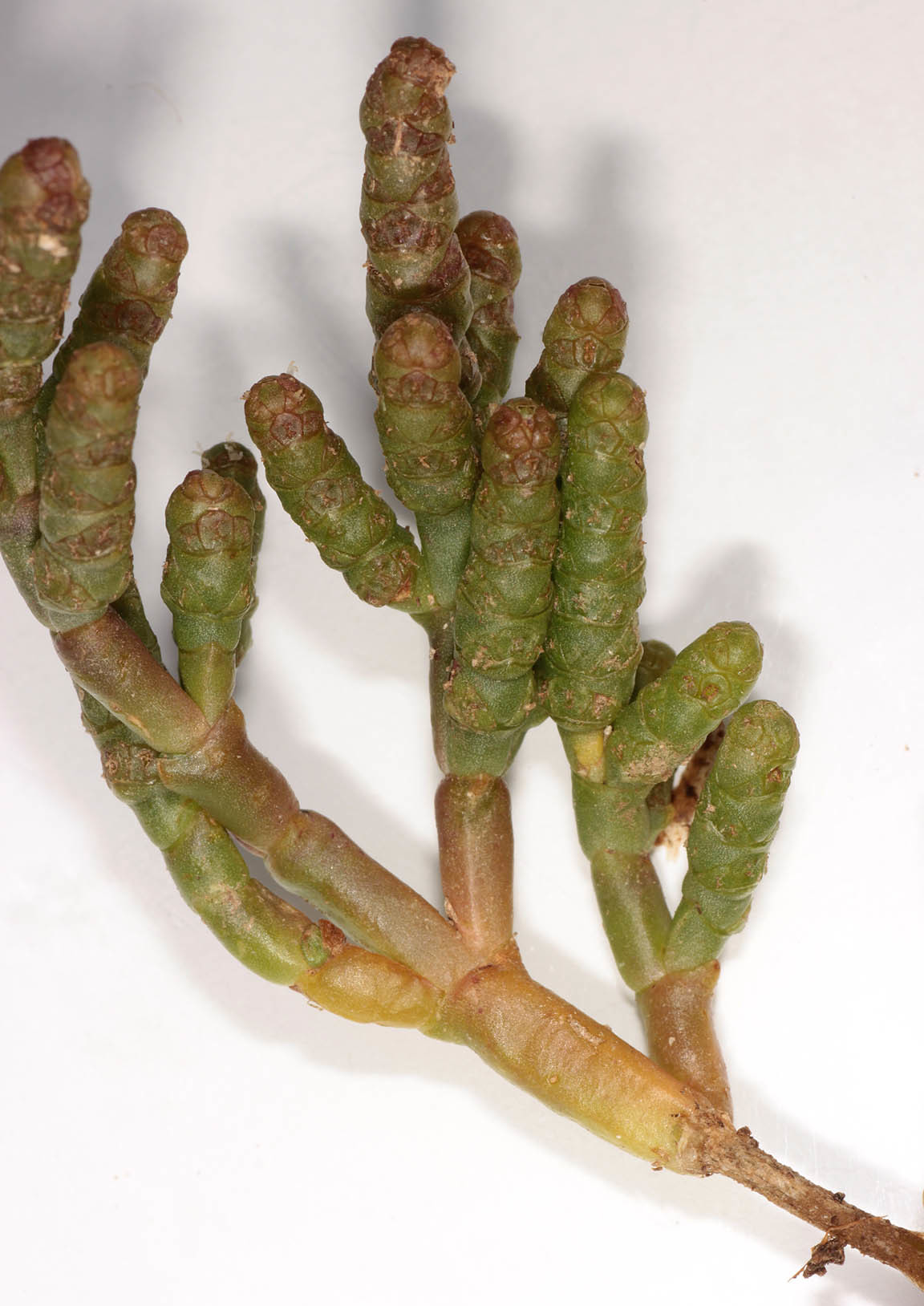 Image of chickenclaws