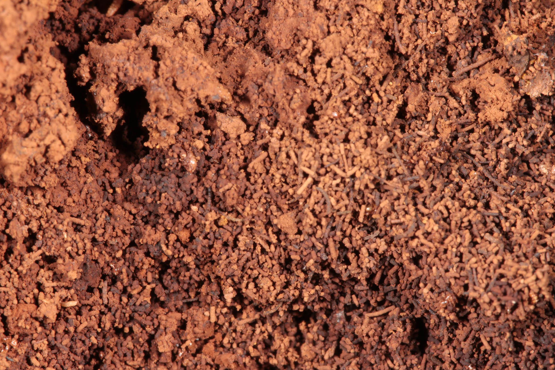 Image of <i>Pisolithus capsulifer</i> (Sowerby) Watling, Phosri & M. P. Martín 2012