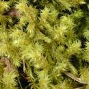 Image of Hylocomiaceae