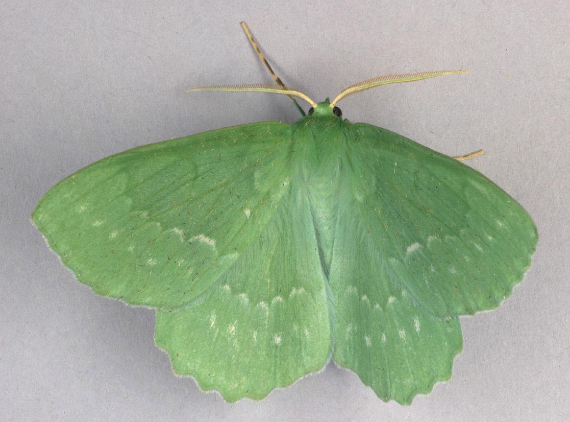 Image of Large Emerald