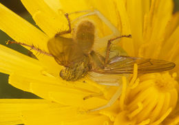 Image of Crab spider