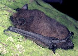 Image of bats