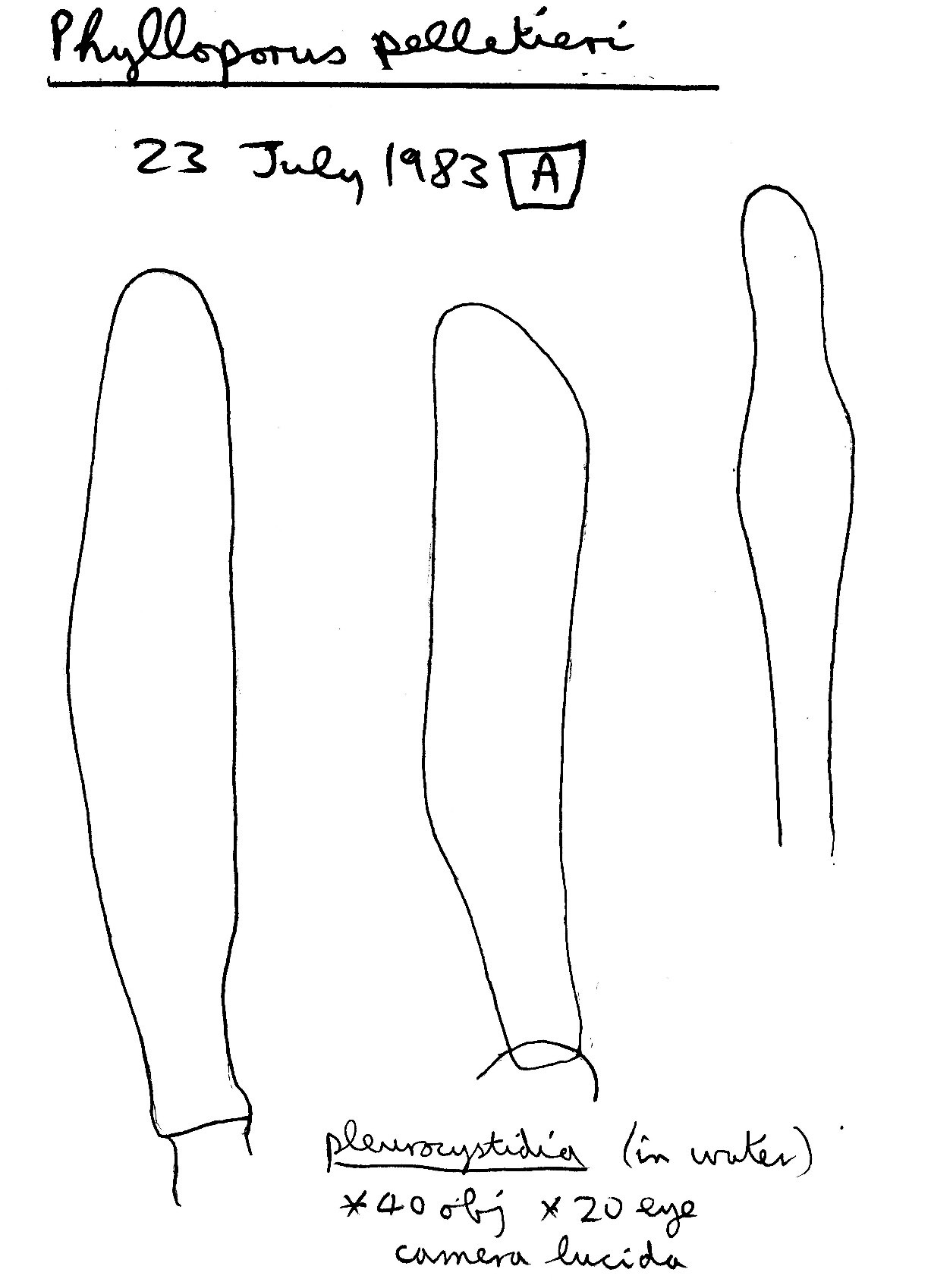 549.bi image 72398