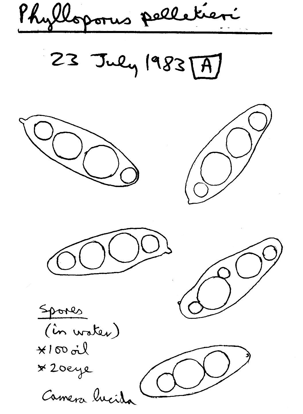 549.bi image 72399