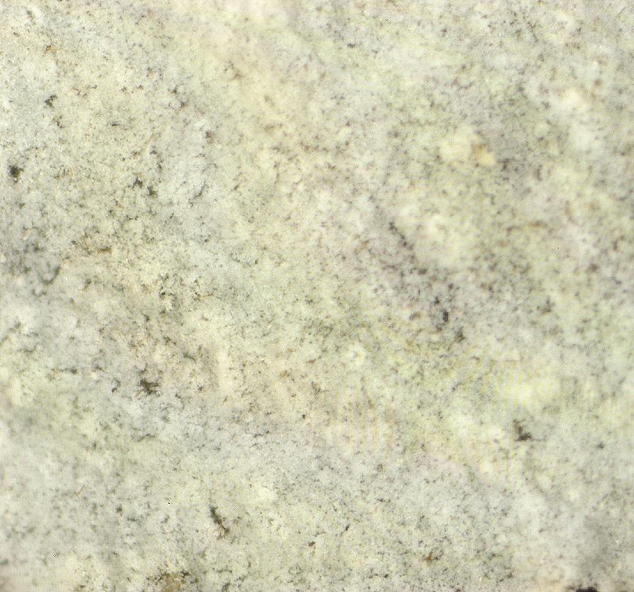 Image of <i>Botryobasidium subcoronatum</i> (Höhn. & Litsch.) Donk 1931