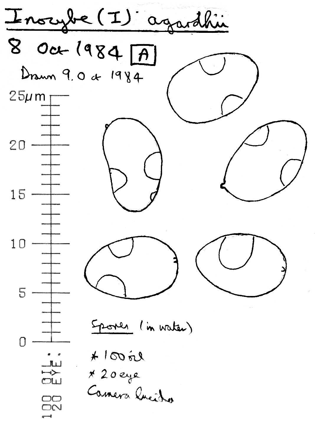 Image of <i>Inocybe agardhii</i> (N. Lund) P. D. Orton 1960