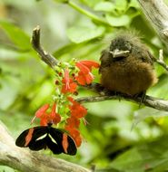 Image of birds