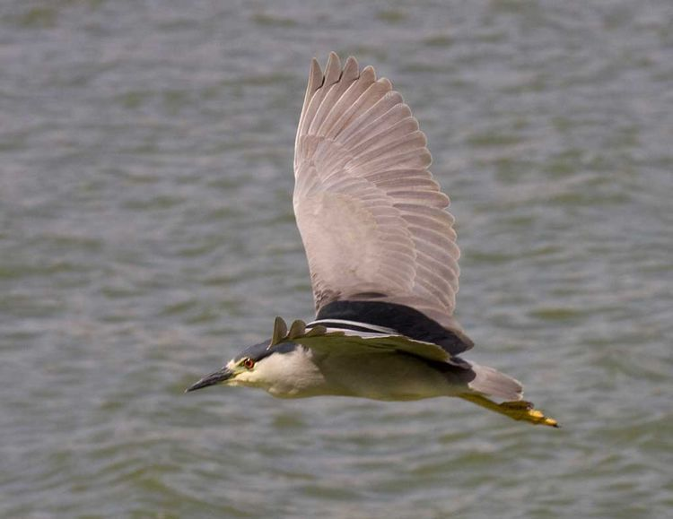 Image of herons and bitterns