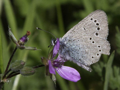 Image of Butterflies and moths