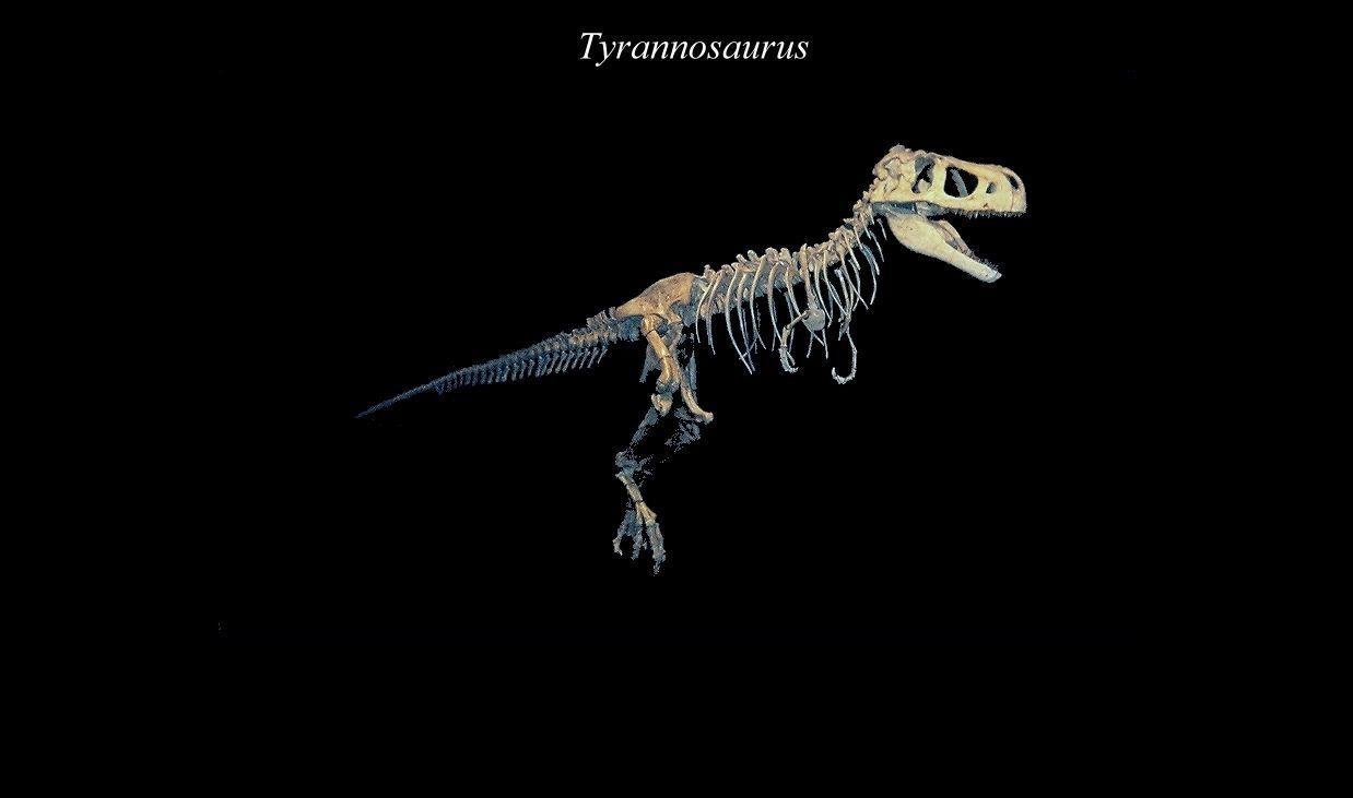 Image of Tyrannosaurids