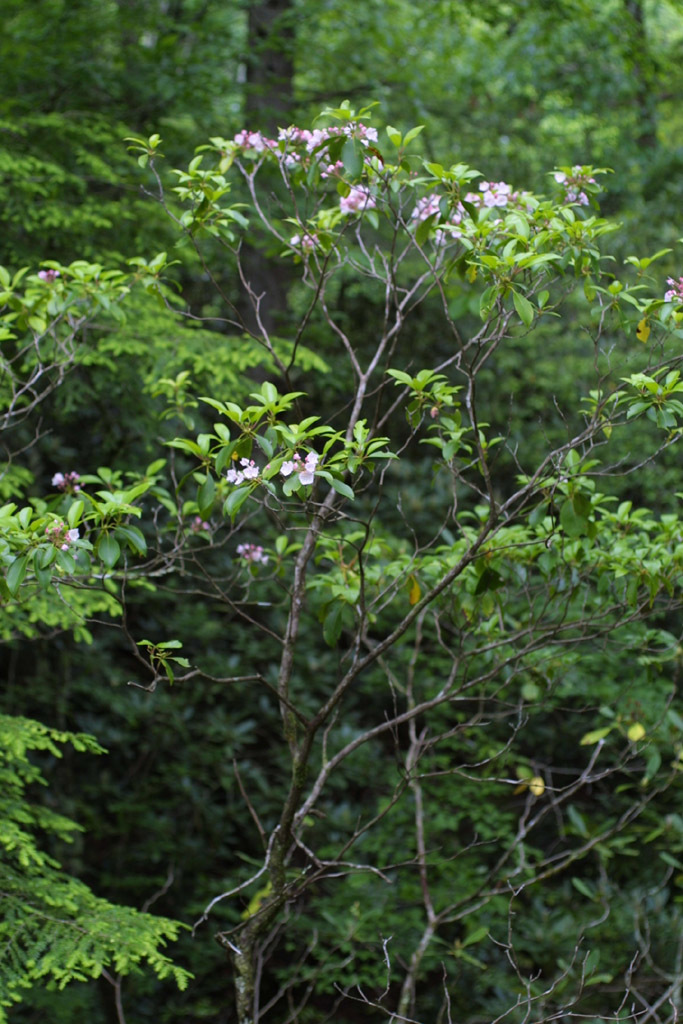607.http   bioimages vanderbilt edu baskauf 11357