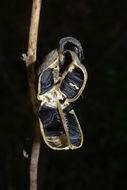 607.http   bioimages vanderbilt edu baskauf 30062.260x190