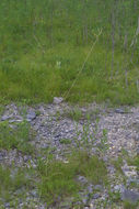 607.http   bioimages vanderbilt edu baskauf 35905.260x190