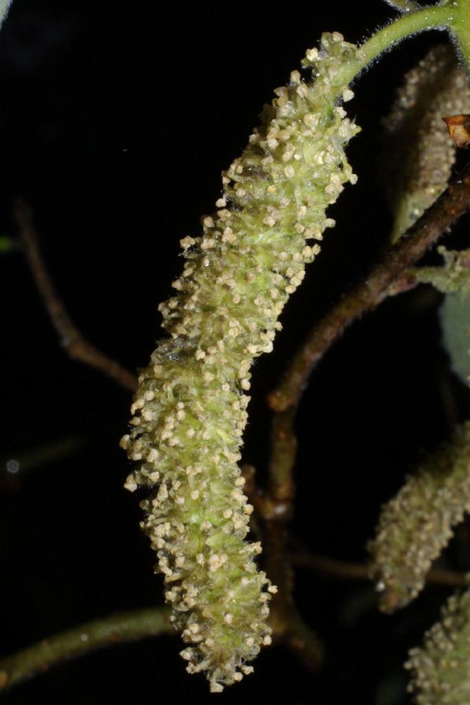 607.http   bioimages vanderbilt edu baskauf 39522