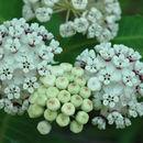 607.http   bioimages vanderbilt edu hessd e5020.130x130