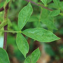 607.http   bioimages vanderbilt edu thomas 0342 01 10.130x130