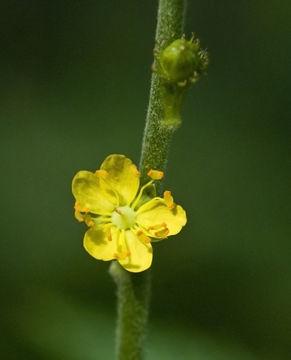 607.http   bioimages vanderbilt edu thomas 0421 01 03.580x360