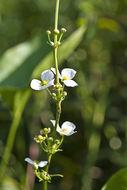 607.http   bioimages vanderbilt edu thomas 0432 00 03.260x190