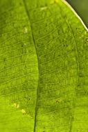 607.http   bioimages vanderbilt edu thomas 0432 00 05.260x190