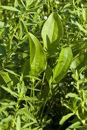607.http   bioimages vanderbilt edu thomas 0432 00 06.260x190