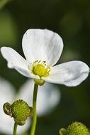 607.http   bioimages vanderbilt edu thomas 0432 00 09.260x190