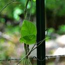 607.http   bioimages vanderbilt edu thomas 0626 01 07.130x130