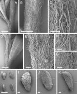 581.phytokeys 40 7973 sp 10 p 7.260x190