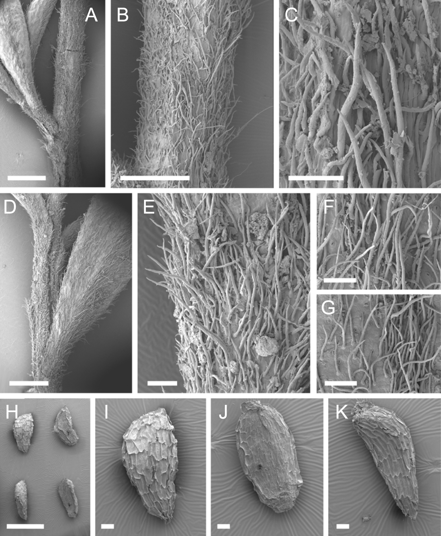 581.phytokeys 40 7973 sp 10 p 7