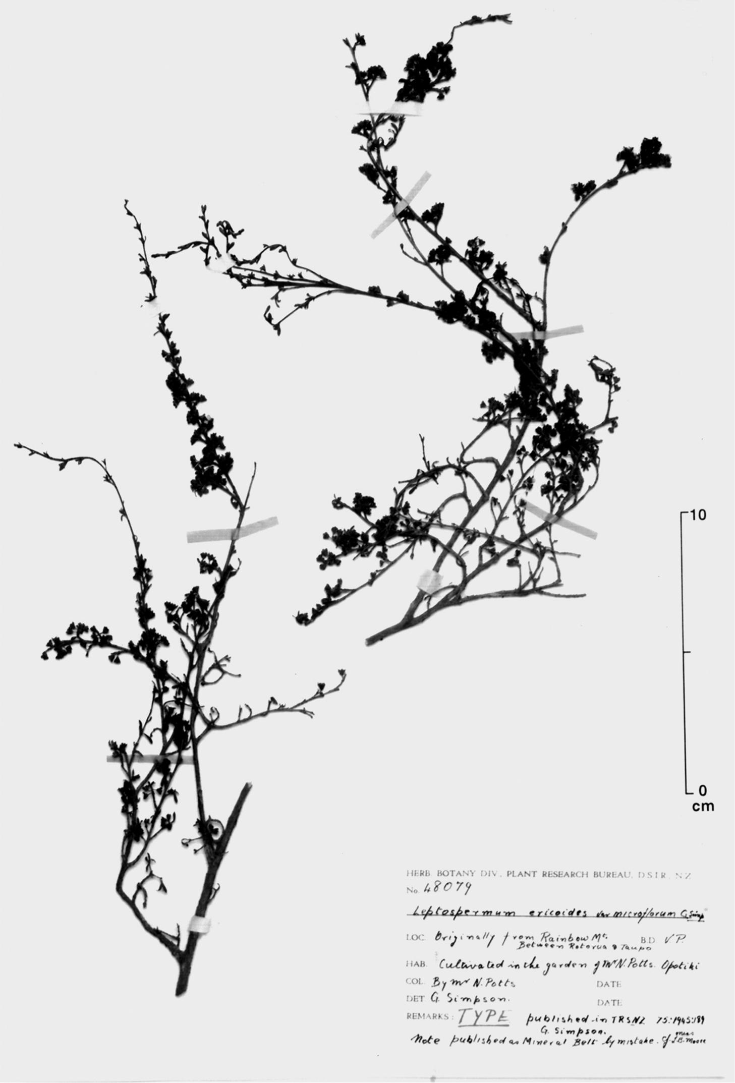 581.phytokeys 40 7973 sp 4 p 5