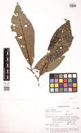 581.phytokeys 47 9076 sp 4 p 3.260x190