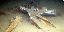 Image of <i>Osedax mucofloris</i> Glover, Kallstrom, Smith & Dahlgren 2005