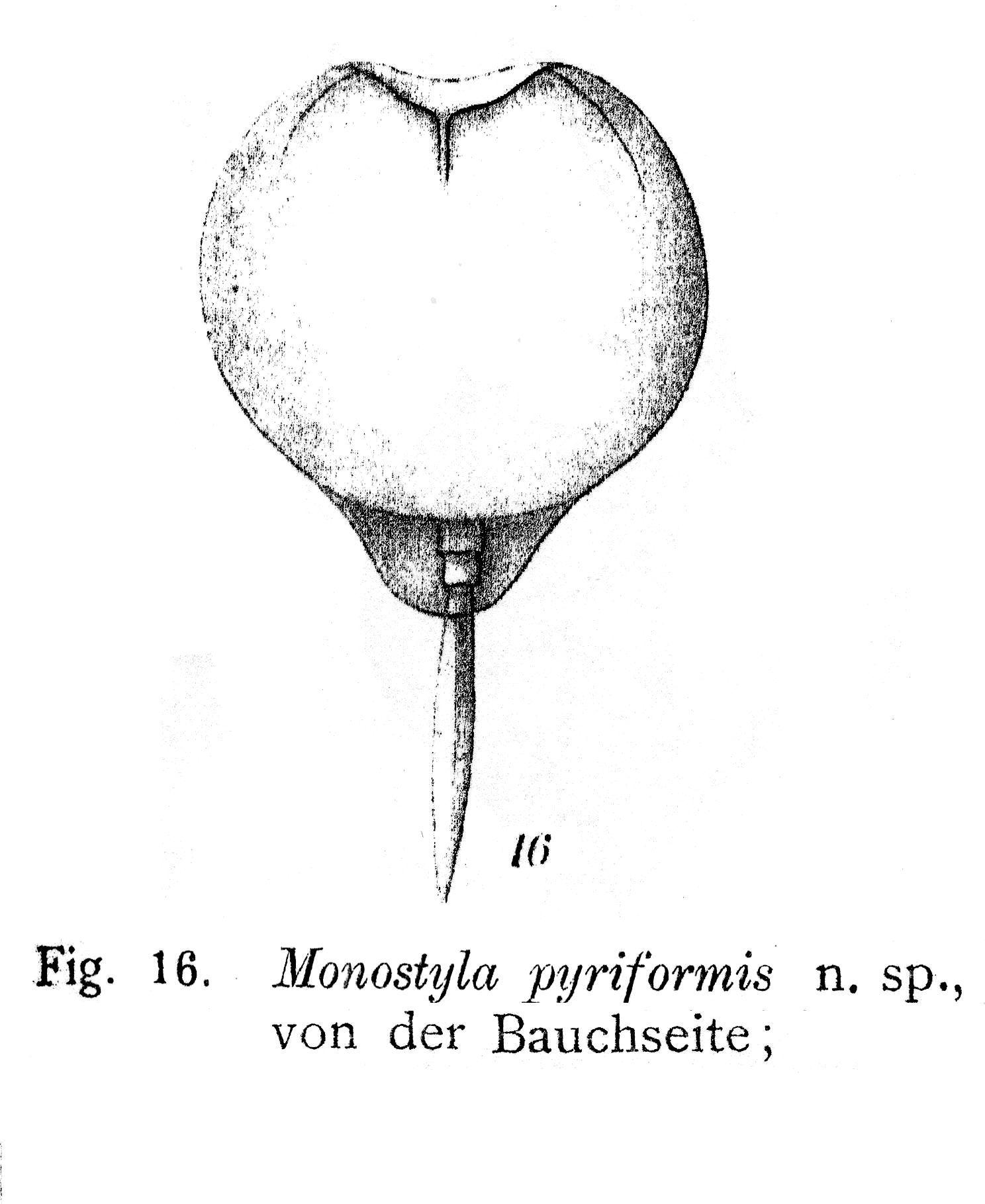 672.monostyla pyriformis daday  1905 jpg