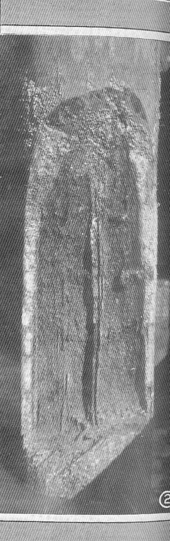 Image of Limnoria