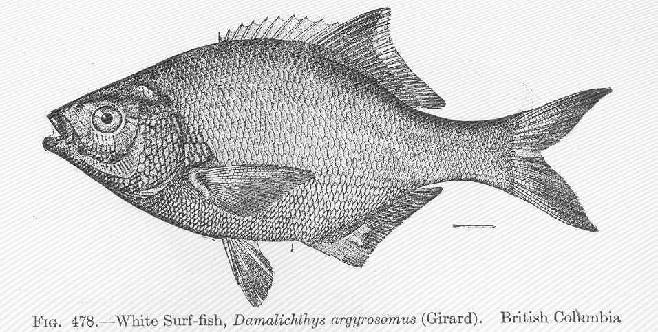 Image of pile perch