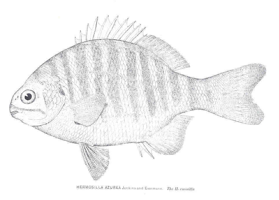 Image of Perch