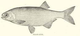 Image of mooneyes