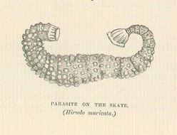 Image of ray leech